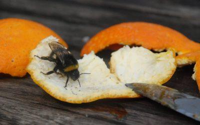 Biene Für seedballs homepage